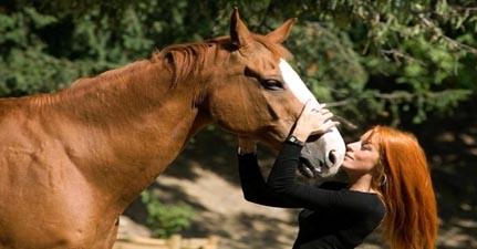 mvb_e_il_suo_cavallo