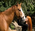 mvb_e_cavallo