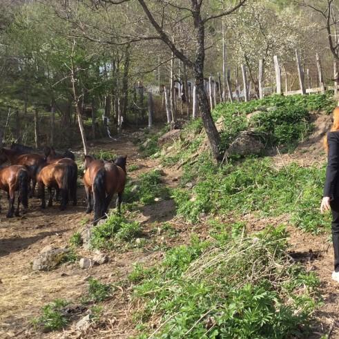 Michela Vittoria Brambilla liberazione cavalli_foto 1