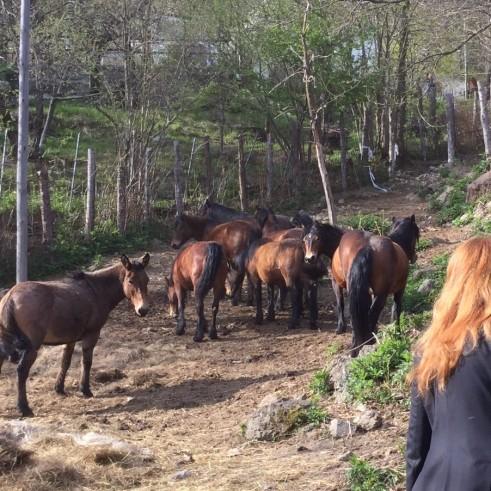 Michela Vittoria Brambilla liberazione cavalli_foto 3