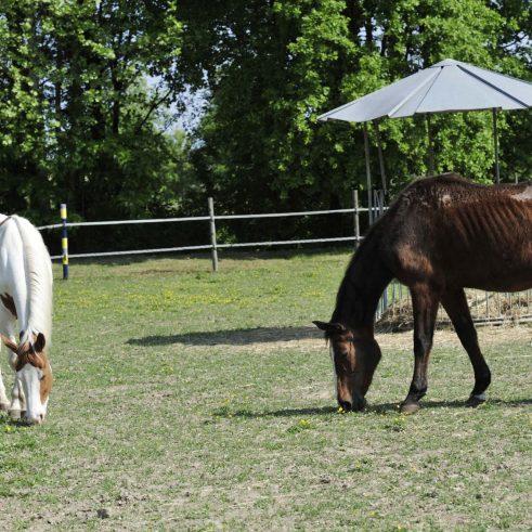 presentazione pdl cavalli