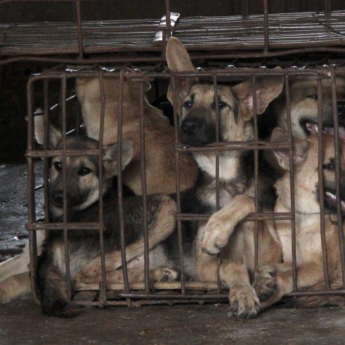 Foto Cani Yulin 1